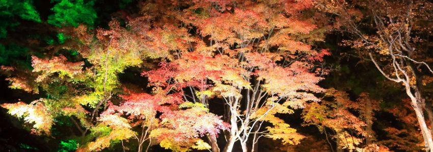松島の円通院のライトアップされた紅葉の案内DMです。