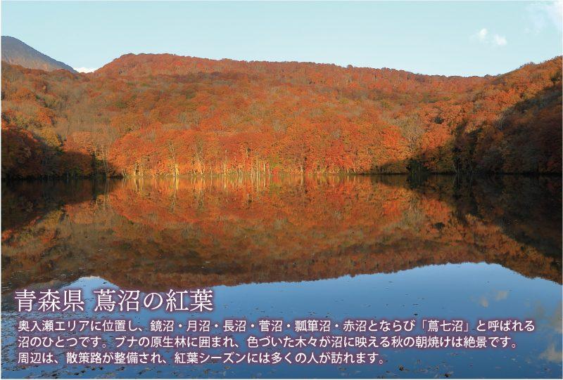 青森県蔦沼の紅葉DMを作成しました。